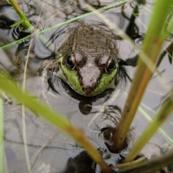 Frog_for-web